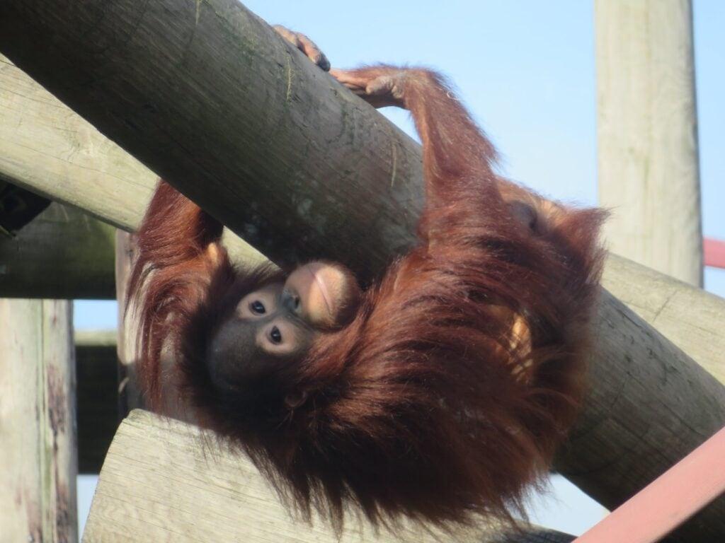 Thumbnail for Monkey World