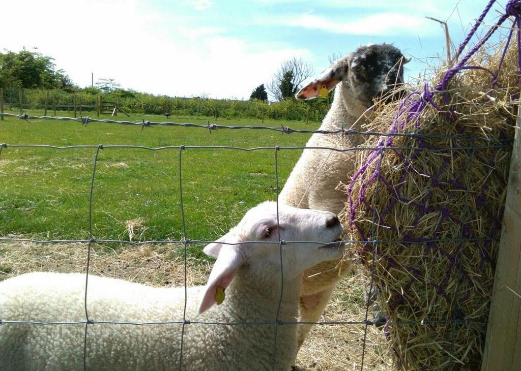 Hastys Adventure Farm