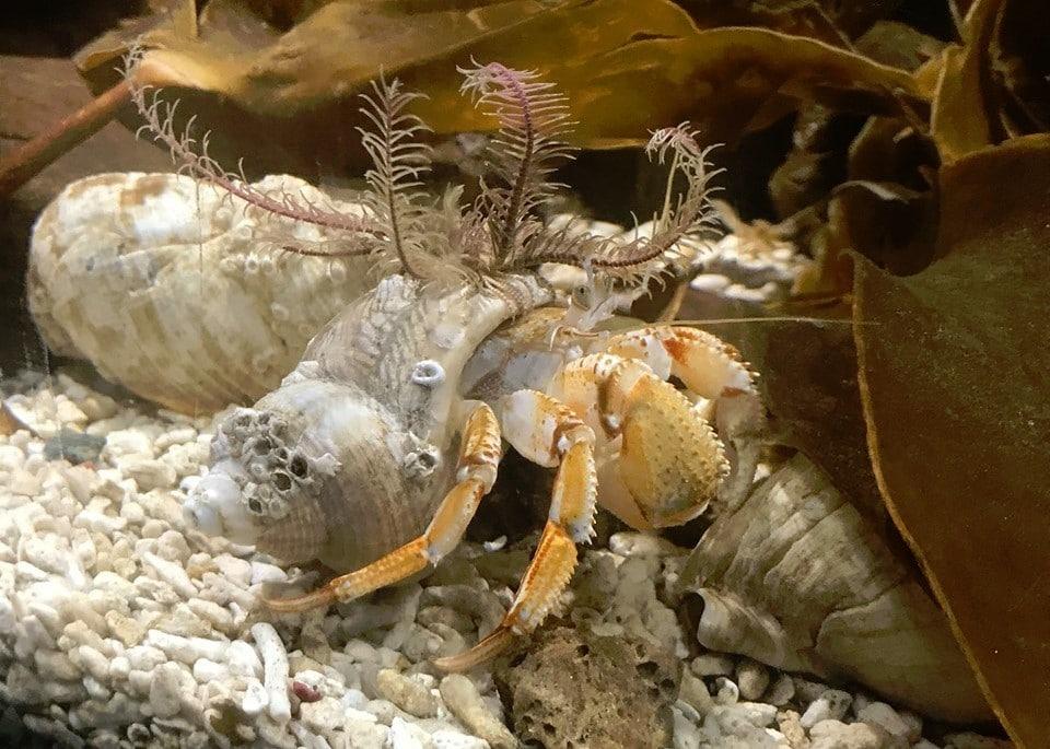 Lake District Coast Aquarium
