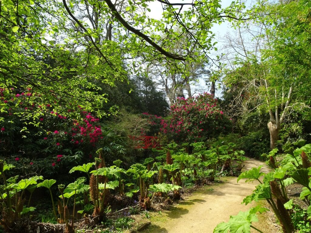 Thumbnail for Abbotsbury Subtropical Gardens