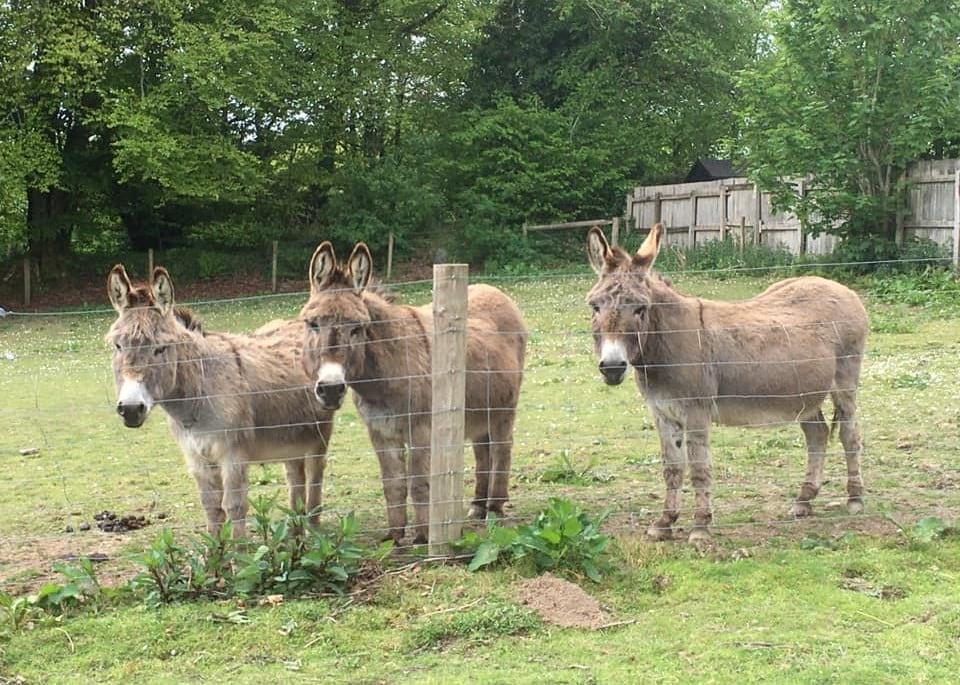 Thumbnail for Tamar Valley Donkey Park