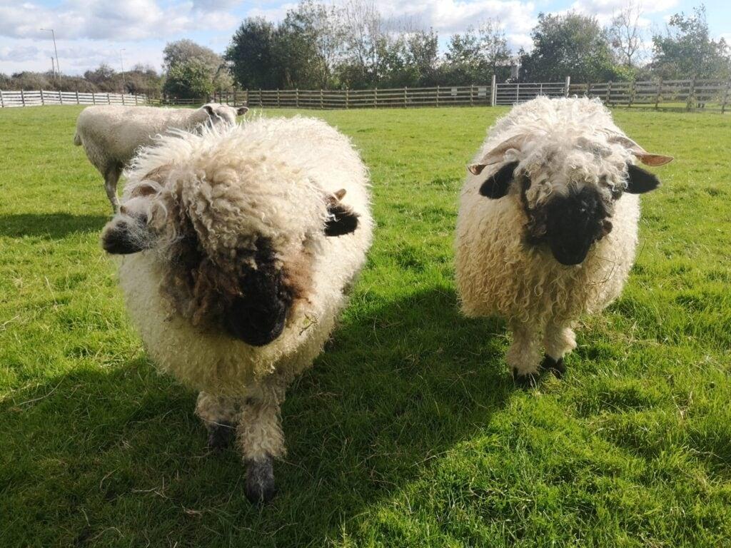 Thumbnail for Farmer Parrs Animal World
