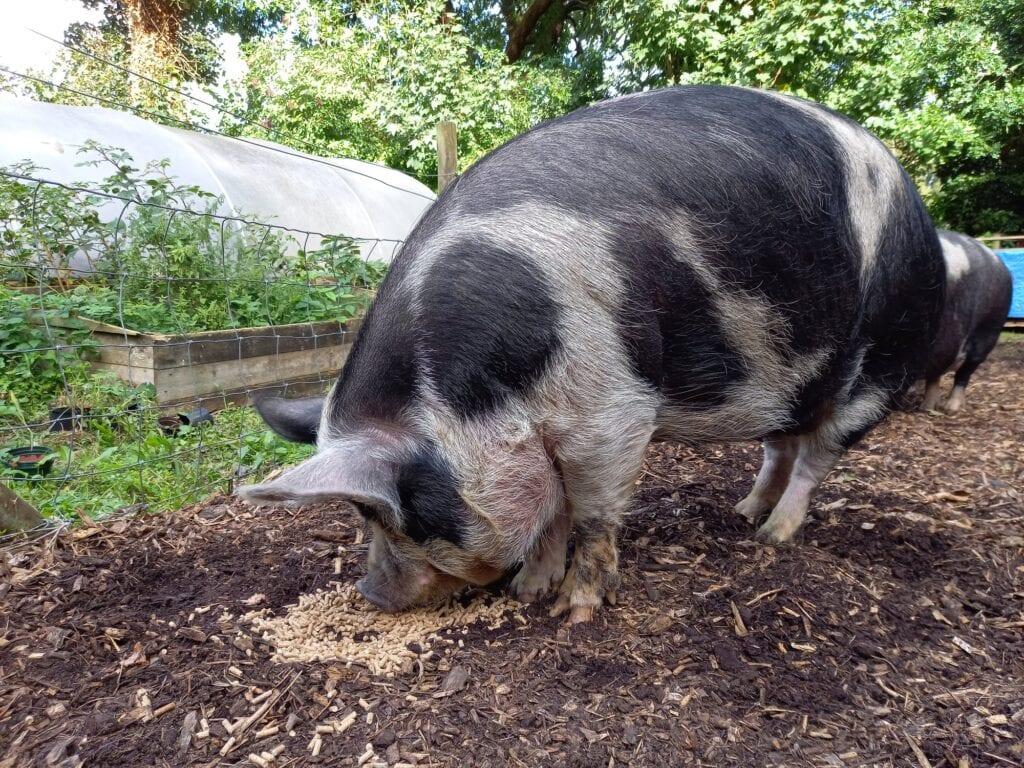 Thumbnail for Tam O'Shanter Urban Farm