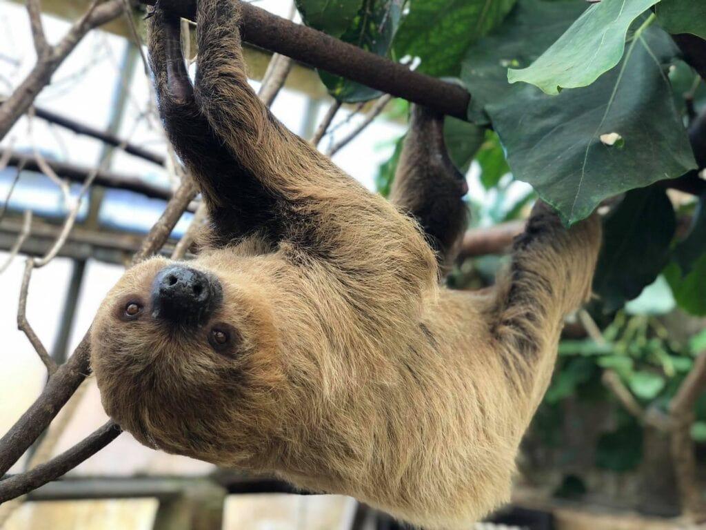 Amazon World Zoo