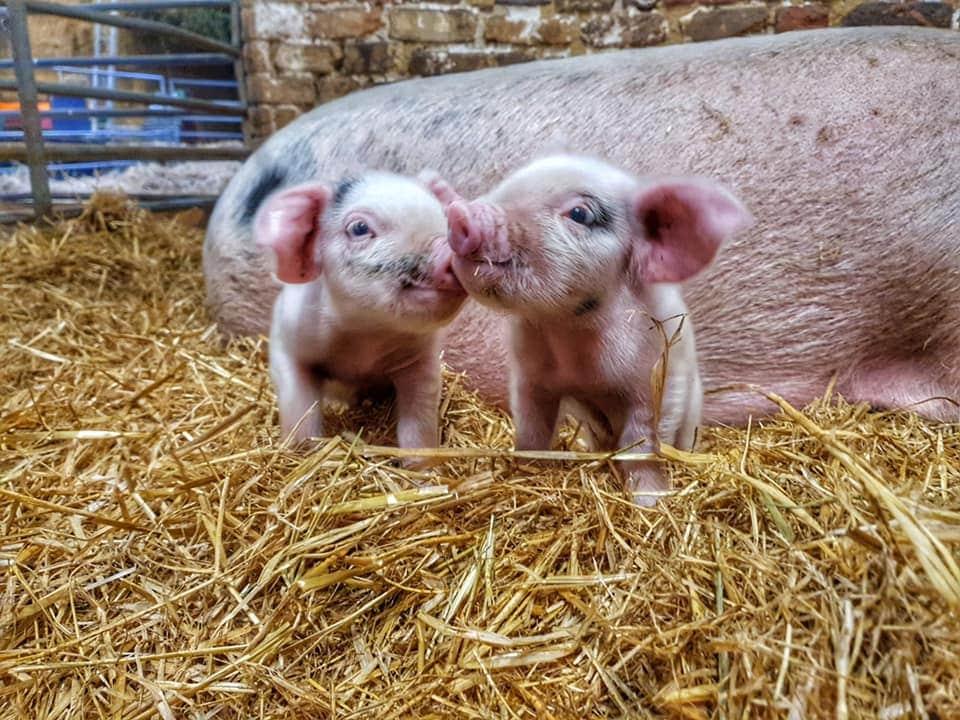 Church Farm Rare Breeds Centre Stow Bardolph