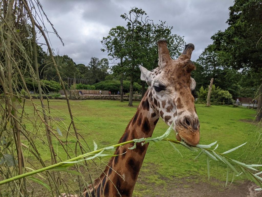 Thumbnail for Knowsley Safari Park