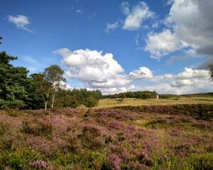 Longshaw, Burbage and the Eastern Moors