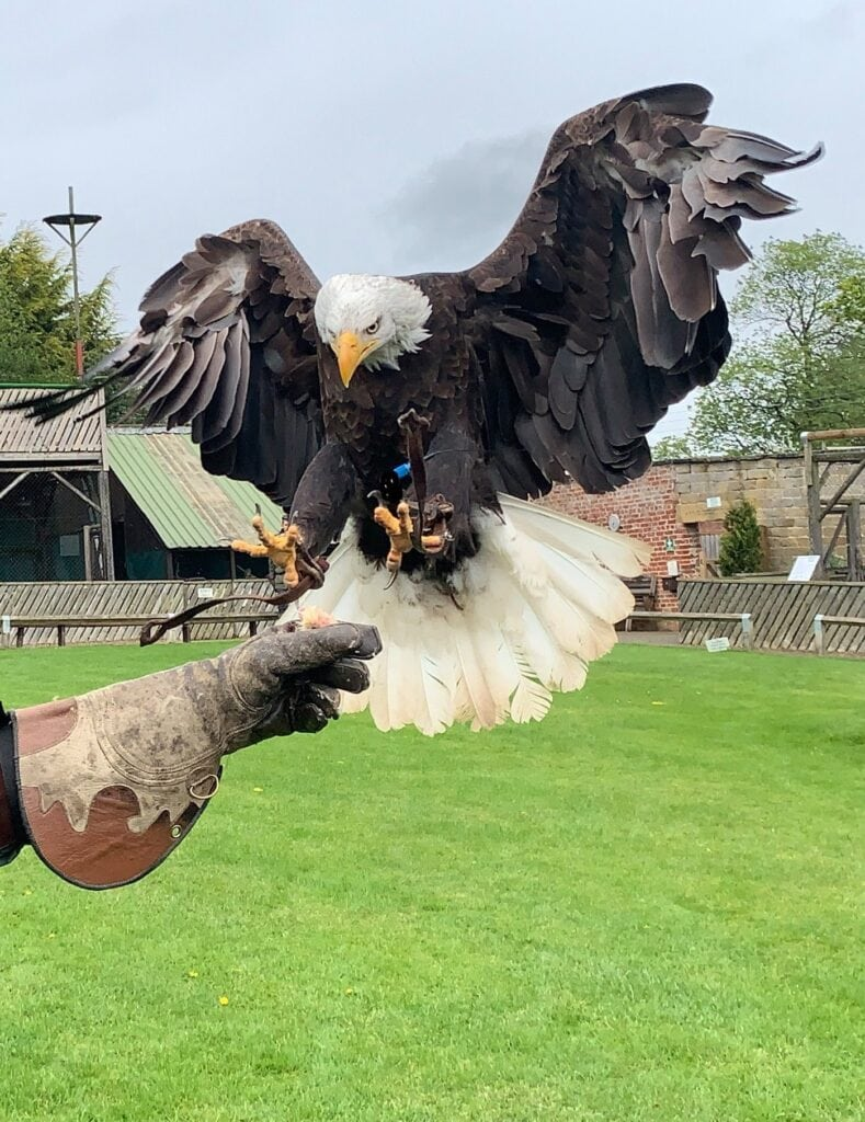 Thumbnail for Thirsk Birds of Prey Centre