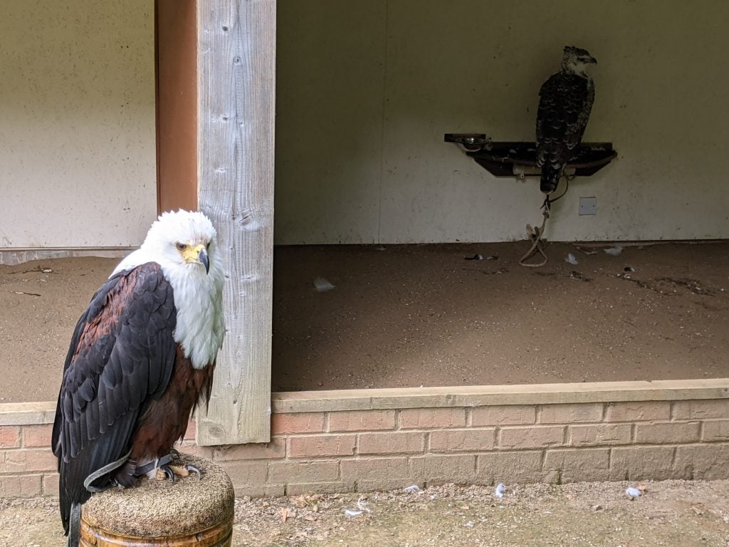Featured image for National Centre For Birds Of Prey