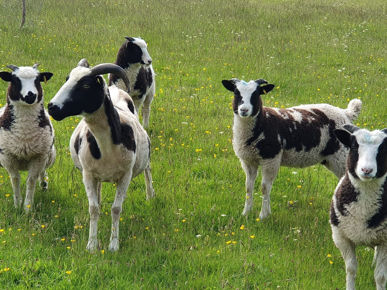 Greenmeadow Community Farm