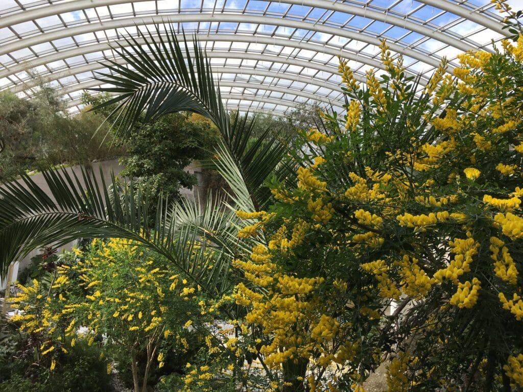 Thumbnail for National Botanic Garden of Wales