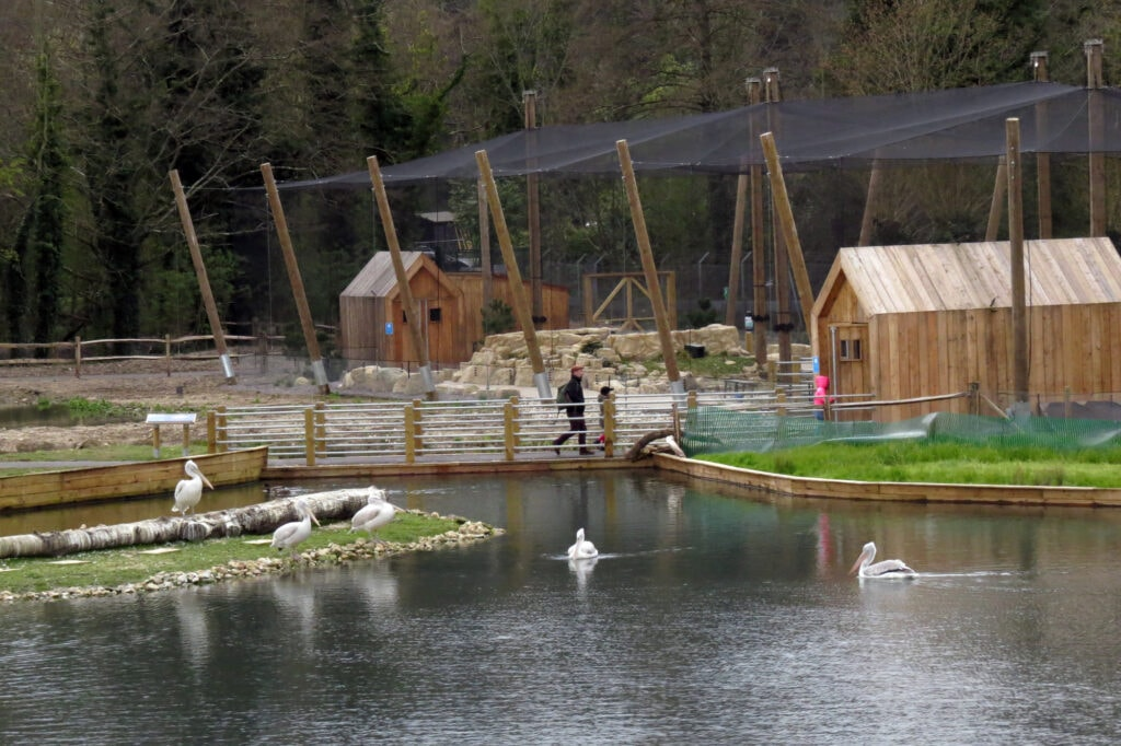 Thumbnail for WWT Arundel Wetland Centre