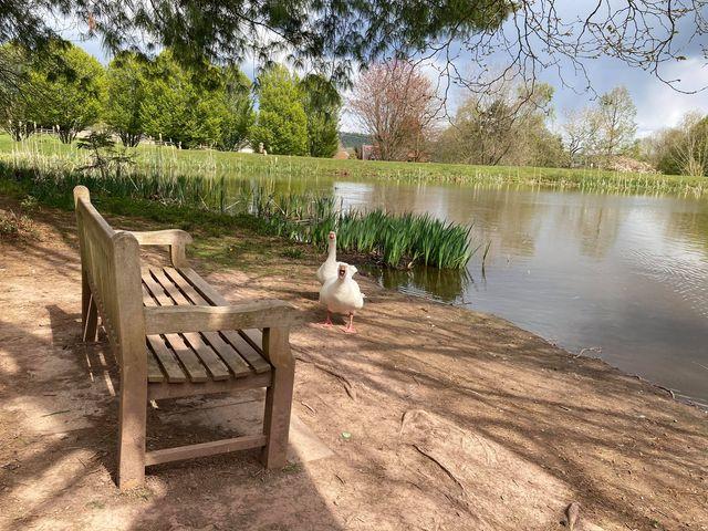 Thumbnail for Bodenham Arboretum