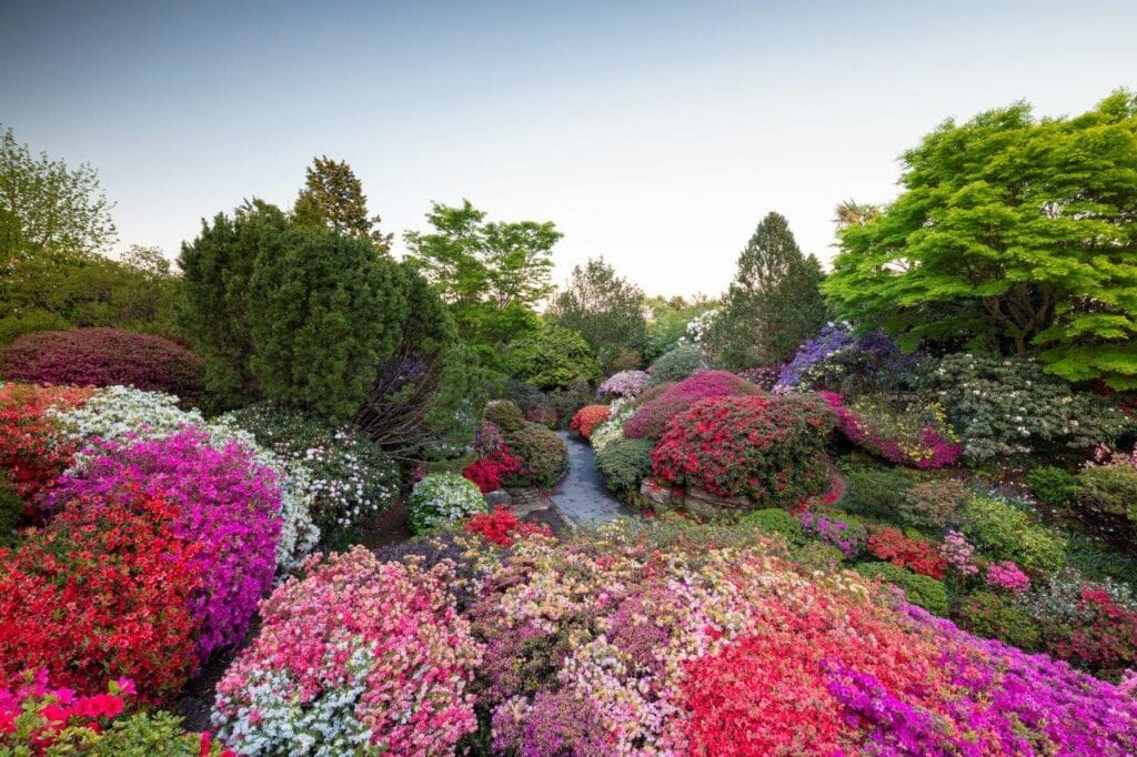 Thumbnail for Leonardslee Lakes and Gardens