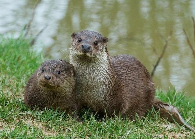 Thumbnail for British Wildlife Centre
