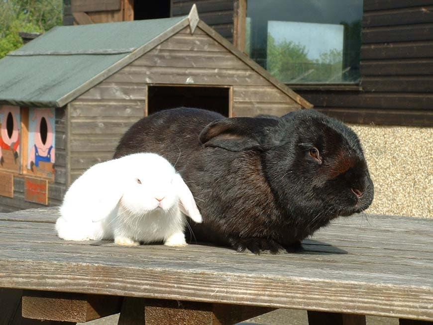 Thumbnail for Dwyfor Rabbit Farm