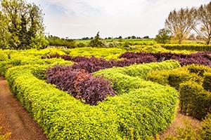 Anker Wood and Maze World at Dobbies