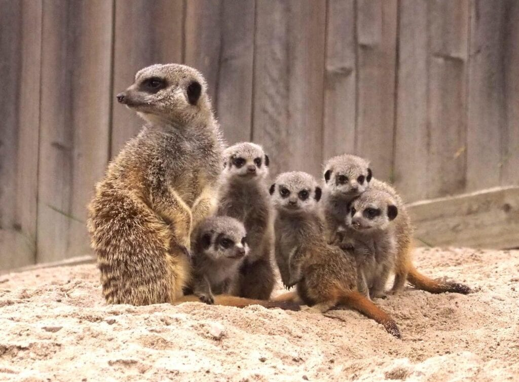 Thumbnail for Camperdown Wildlife Centre