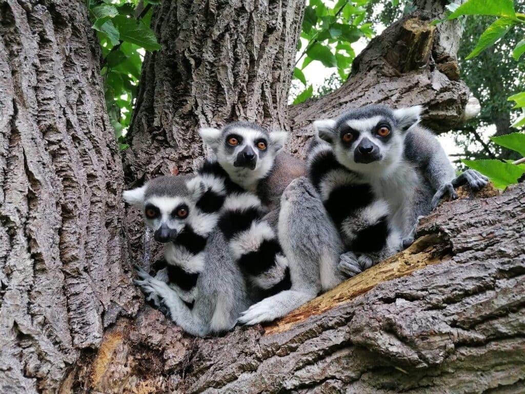 Thumbnail for Birmingham Wildlife Conservation Park