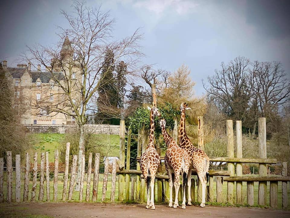 Thumbnail for Blair Drummond Safari Park