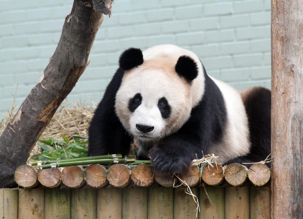 Thumbnail for Edinburgh Zoo