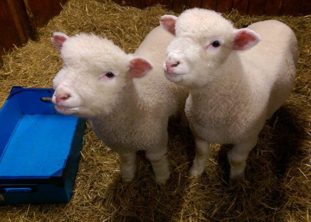 Thumbnail for LOVE Gorgie Farm