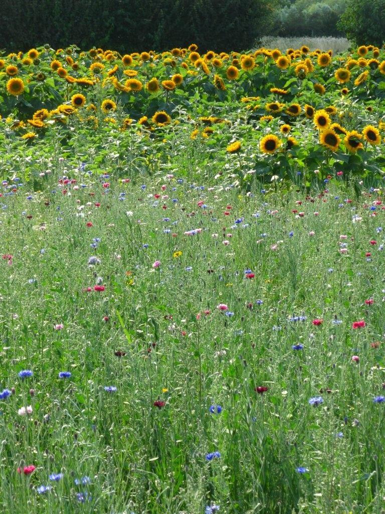 Confetti Flower Field