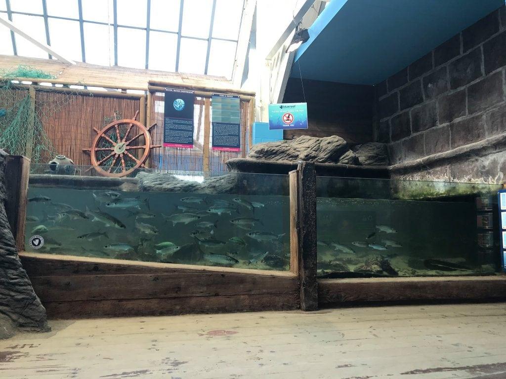 Blue Reef Aquarium Cornwall