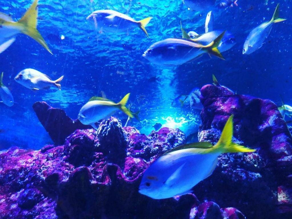 Featured image for Tynemouth Aquarium