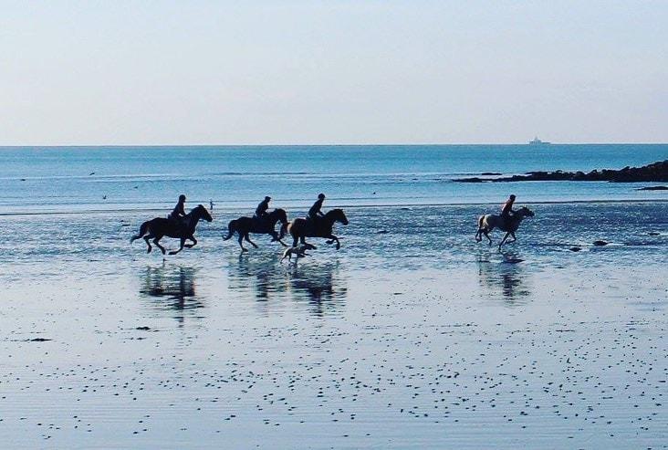 Cornwall Swimming Horses