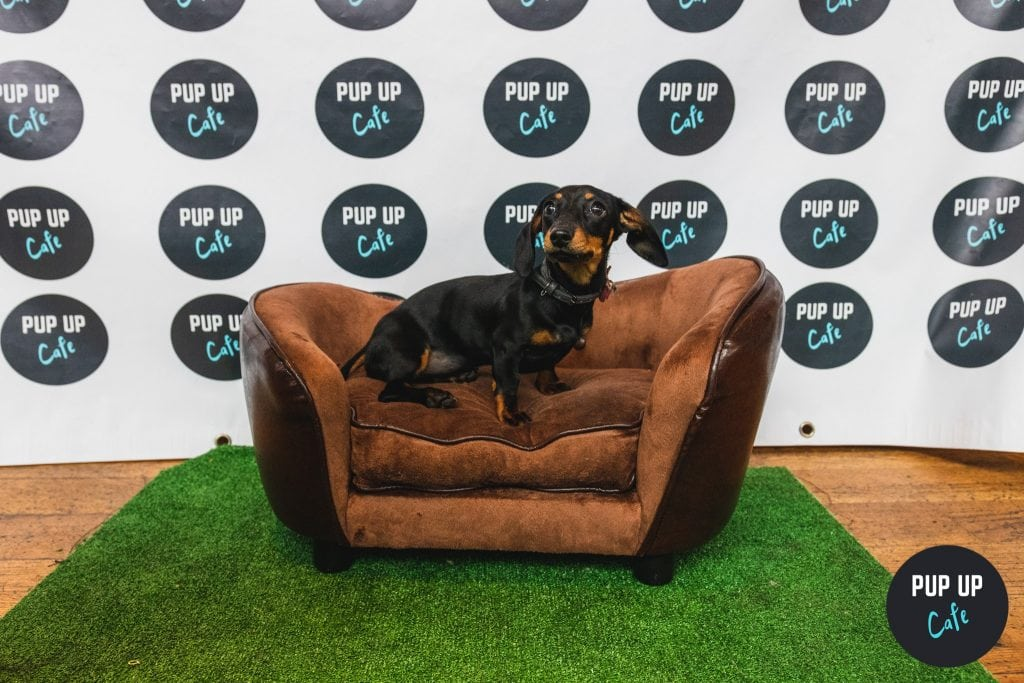 Pup Up Cafe Dog Events Across the UK