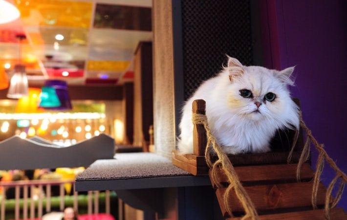 Kitty Cafe Leeds