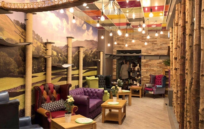 Featured image for Kitty Cafe Leeds
