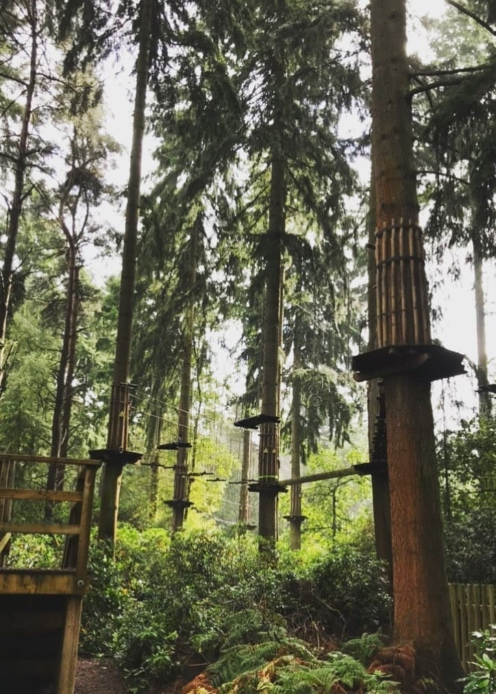 Featured image for Go Ape Thetford