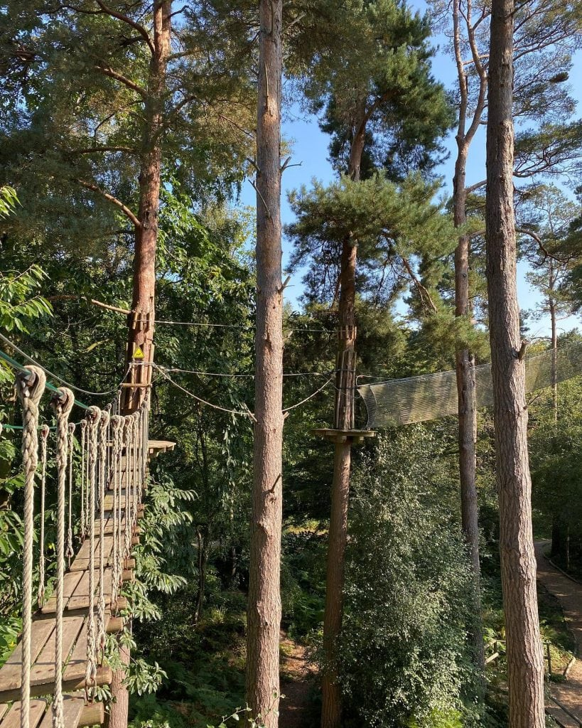 Featured image for Go Ape Bedgebury