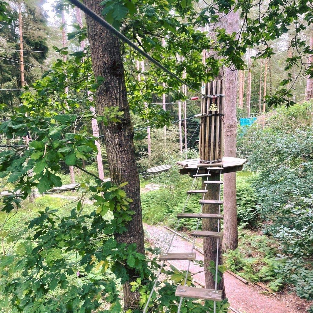 Featured image for Go Ape Forest of Dean Beechenhurst