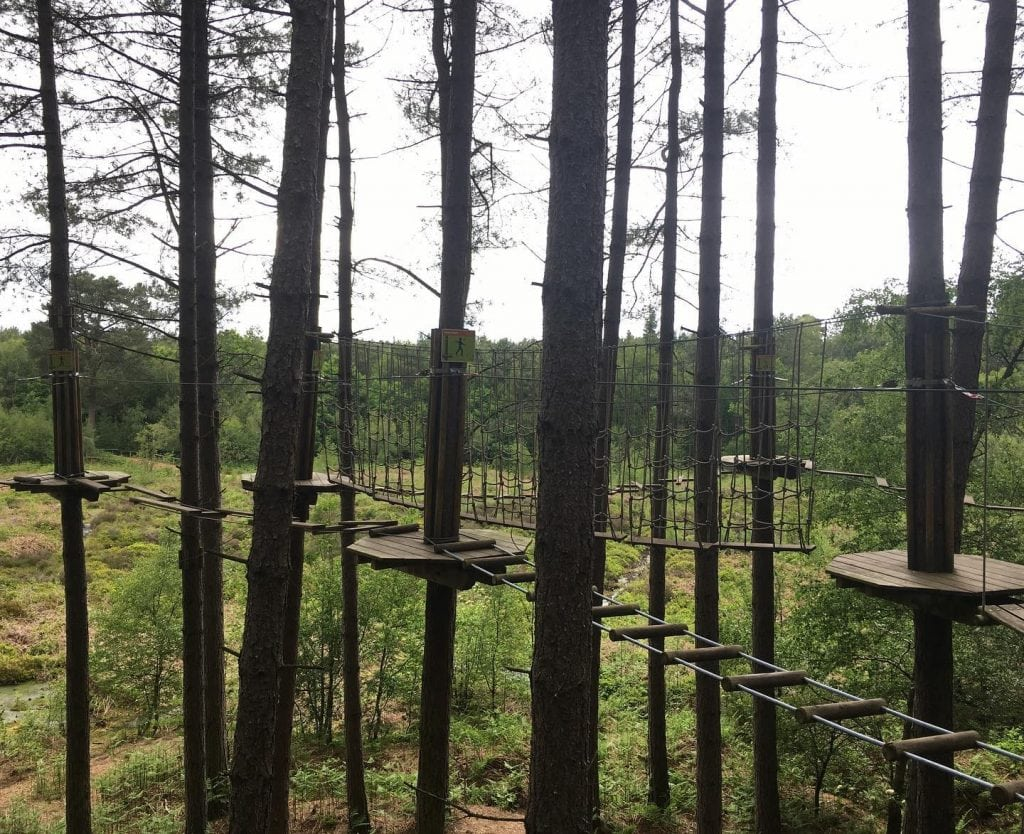 Featured image for Go Ape Delamere Forest